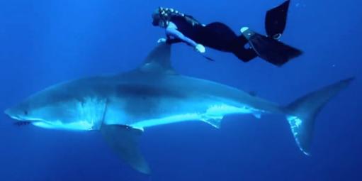 Tubarão-Capa-Blog